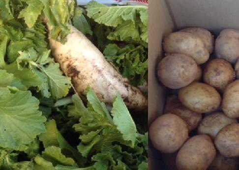 1/20にあきる野市の楠本様から大根とジャガイモを頂き、1/21、日野市の自立援助ホームトリノスへ届けました。