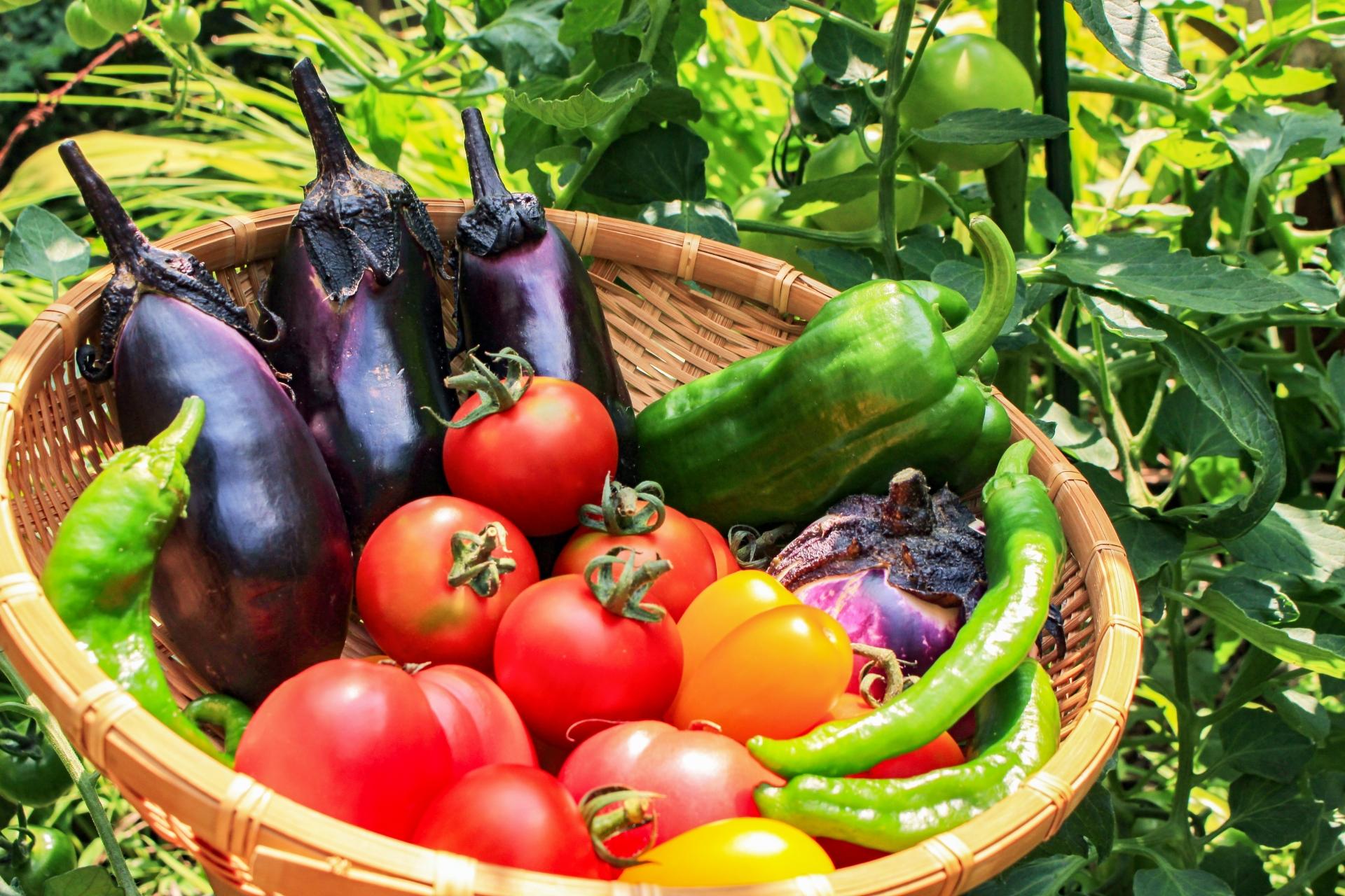 7月の食品受贈&贈呈記録、及び、活動記録です
